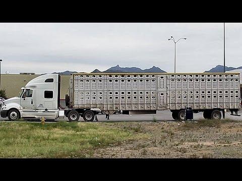 TCI RENTAL TRUCK w/ LIVESTOCK CARRIER TRAILER ~ TRUCKING