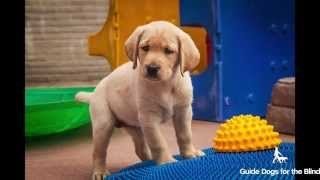 Puppy Socialization January 2015