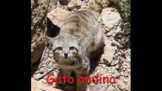 Animales del Perú en peligro de extincion