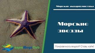 Живые морские звезды для аквариума (виды, как ходят, регенерация, что едят)