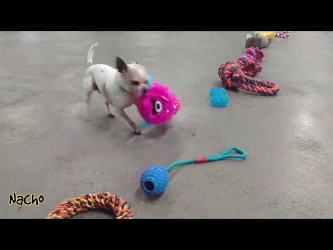 Ashley - These Adoptable Pups Picking Out Their Christmas Toys Will Make You Smile!!