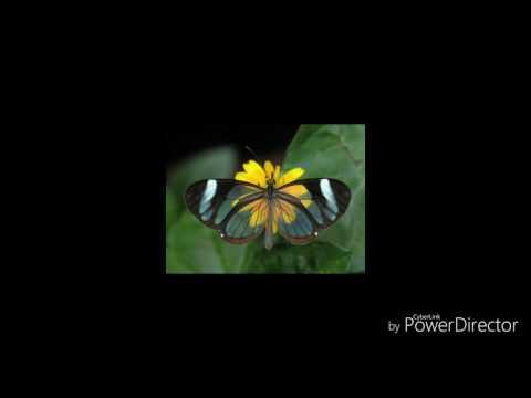 Holy Spirit - PNG Gospel