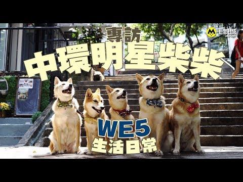 【寵物明星】舊城中環明星柴柴 WE5