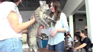 Видео мейн-кунов на выставке кошек FiFe 27-28/09/2014 Россия СПБ http://coonplanet.ru/