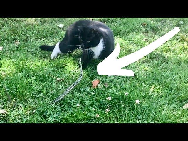 Snake ATTACKS Cat