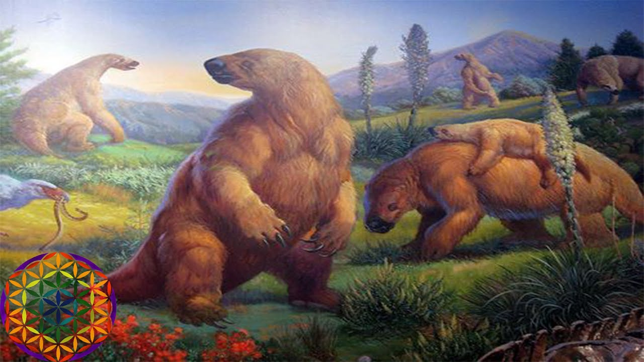 5 Surprising Animals That Have Gone Extinct In The Last -8236