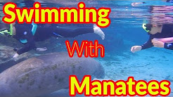 Full Time RV Living | Swimming With Manatees | Crystal River, FL | S2 EP046