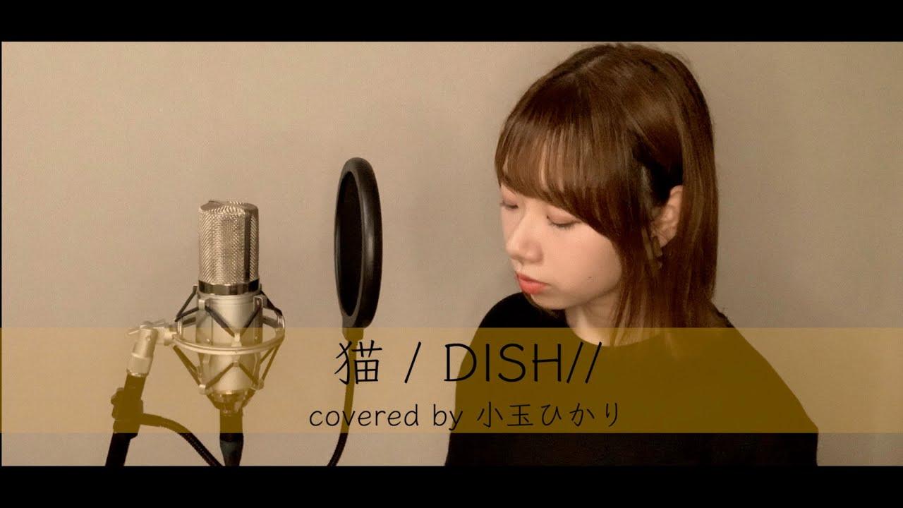 猫 / DISH// (covered by 小玉ひかり)