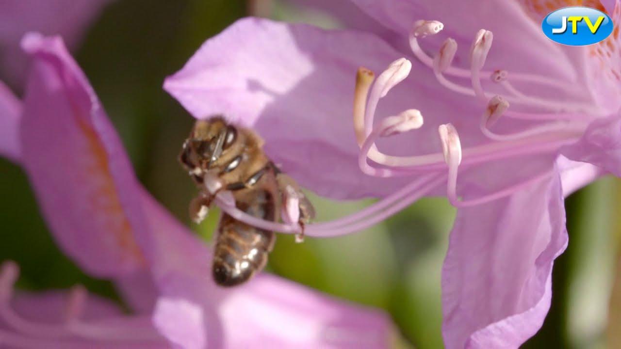 Mleczko pszczele. Niesamowite właściwości zdrowotne. Skład, jak przechowywać. Dla zdrowia