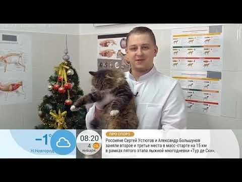 Вопрос: Кошка рвёт мишурой, новогодним дождиком с ёлки. Что делать?