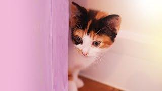 I got a new Kitten thumbnail