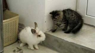 Кот и кролик под музычку