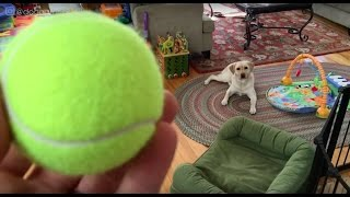 Stella and the Ball Reunited at Last!