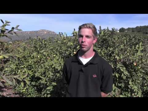 Harvest of the Month Organic Guavas