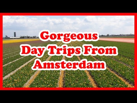 5 Gorgeous Day Trips From Amsterdam | Netherlands Day Trips