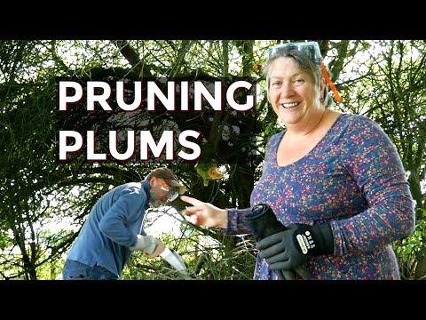 Pruning Plum Trees (2018)