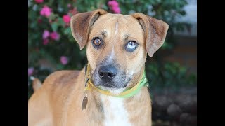 Dog of the week: Adopt Sonoran