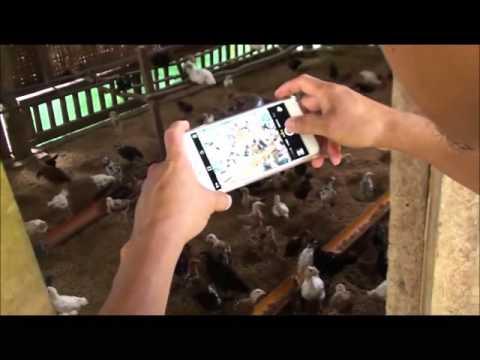 Maribojoc Organic Demo Farm   Nov 2015   Bohol Pt4