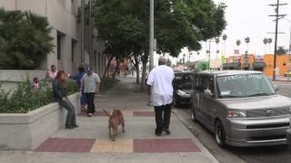 Loose Dogs Are Common In South Los Angeles