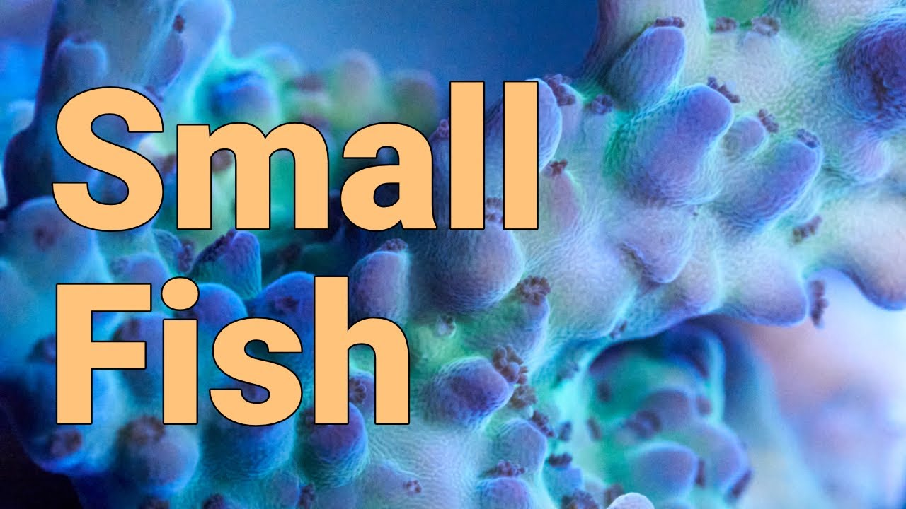 Reefers direct corals betting
