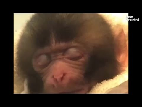 Baby monkeys smile in their sleep