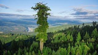 9 unübliche Fehler in der Natur