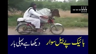 Most funny Pakistani video | Pakistani funny clip video | Most funny compilations