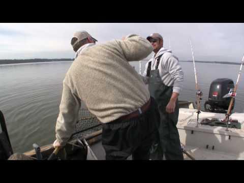 Largest Catfish ever caught on film in North America