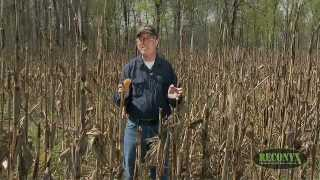 What Is The Best Food Plot Blend?
