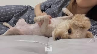ASMR 인척 (수다,강아지 건강검진,일상,수면영상)