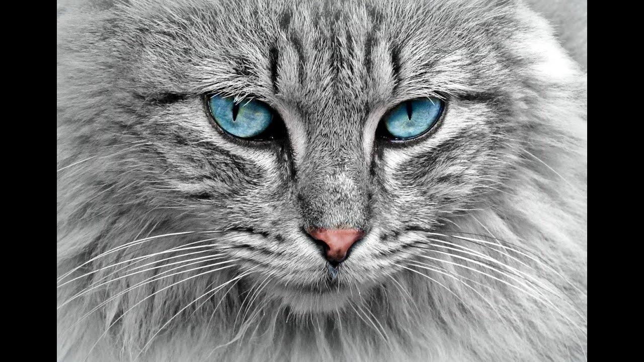 arctic cat 600