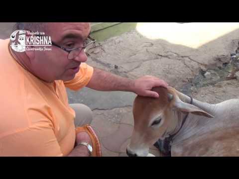 TEMPLO DE GIRIDHARI DAUJI DA ISKCON e KARAULI,  Jaipur VÍDEO 07