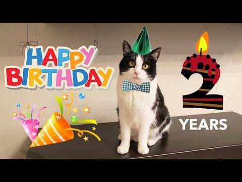 HAPPY BIRTHDAY cat Pusic !! 2 years!