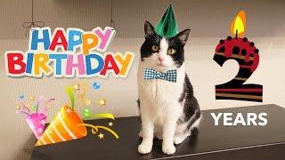 Скачать HAPPY BIRTHDAY Cat Pusic 2 Years