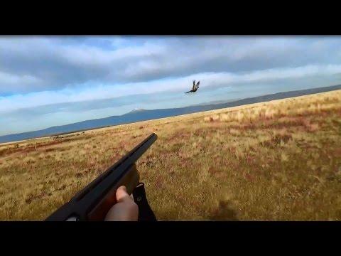 10 Pheasant In 2 Minutes: Oregon Pheasant Hunt