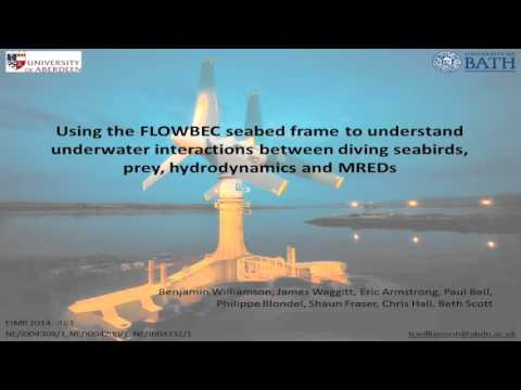 Using the FLOWBEC Seabed Frame to Understand Underwater Interactions Between Diving Seabirds...