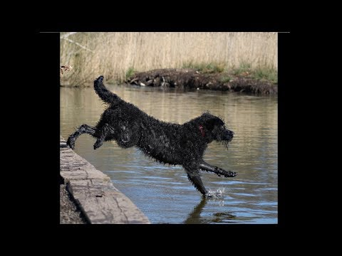 my dog can walk on water... (EPIC)