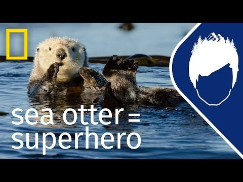 Sea Otters (Episode 5) | wild_life with bertie gregory