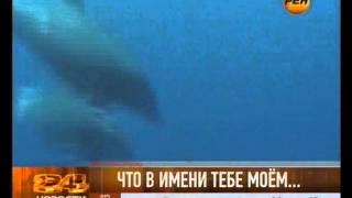 У дельфинов есть имена(, 2013-07-24T07:25:18.000Z)
