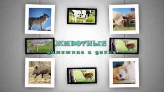 Домашниe и дикие животные. Развивающие мультфильмы для детей