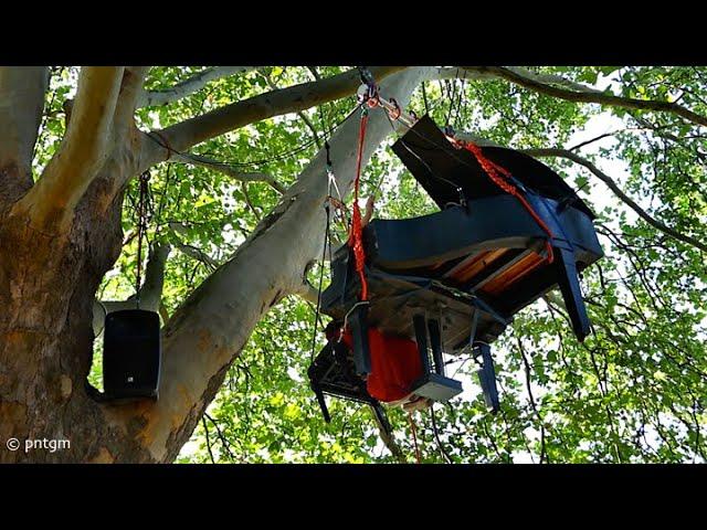TREE TALK @ plane tree at Linz castle (A)
