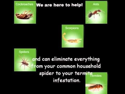 How to Choose a Pest Control Professional