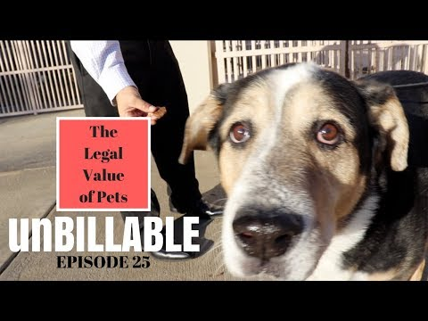 LEGAL VALUE OF PETS | UNBILLABLE E25