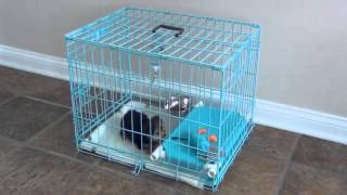 How do I potty train a small breed puppy  Quick and simple solution for Housebreaking a puppy