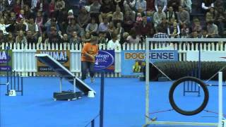 Sport News, Agility: Poodle And Tarryn In Dog Agility Contest, South Africa