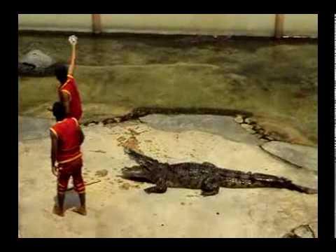 crocodile show in thailand 2010- xiếc cá sấu hay và hồi hộp- phuochoadilac- phan 2.mp4