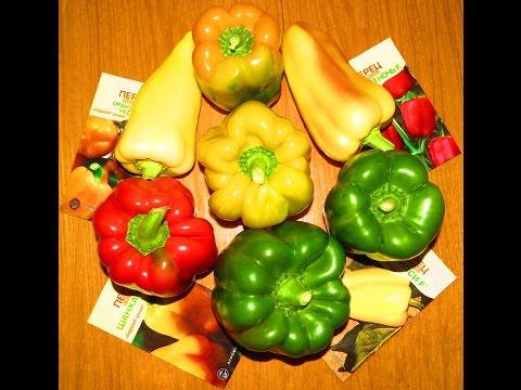 Семена и плоды сладкого перца. Лучшие урожайные сорта. Личный опыт. | урожайные | сладкого | посадить | сладкий | семена | сажать | огород | семян | перца | перец