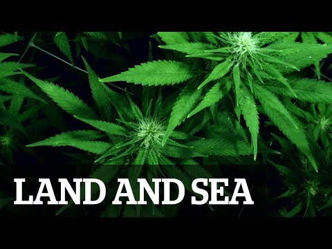 Land and Sea: Cannabis Crusaders