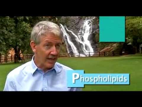 The health benefits of Phospholipids