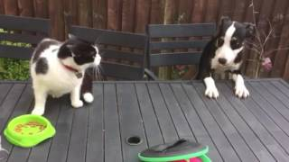 Puppy begs cat to share.